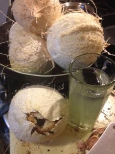 coconuts-algae